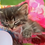 猫deチョコレートinバレンタイン♡ねこ好きが悶絶するネコチョコ集♪