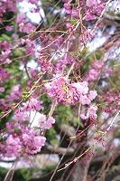 醍醐寺の太閤花見行列の時間と京都からのアクセス、駐車場について