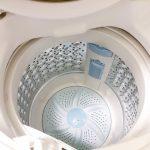 カメムシを洗濯機で洗っちゃった!洗い直しは必要?毒はある?