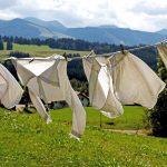 カメムシは布団や洗濯物になぜ寄ってくる?寄せ付けない対策は?